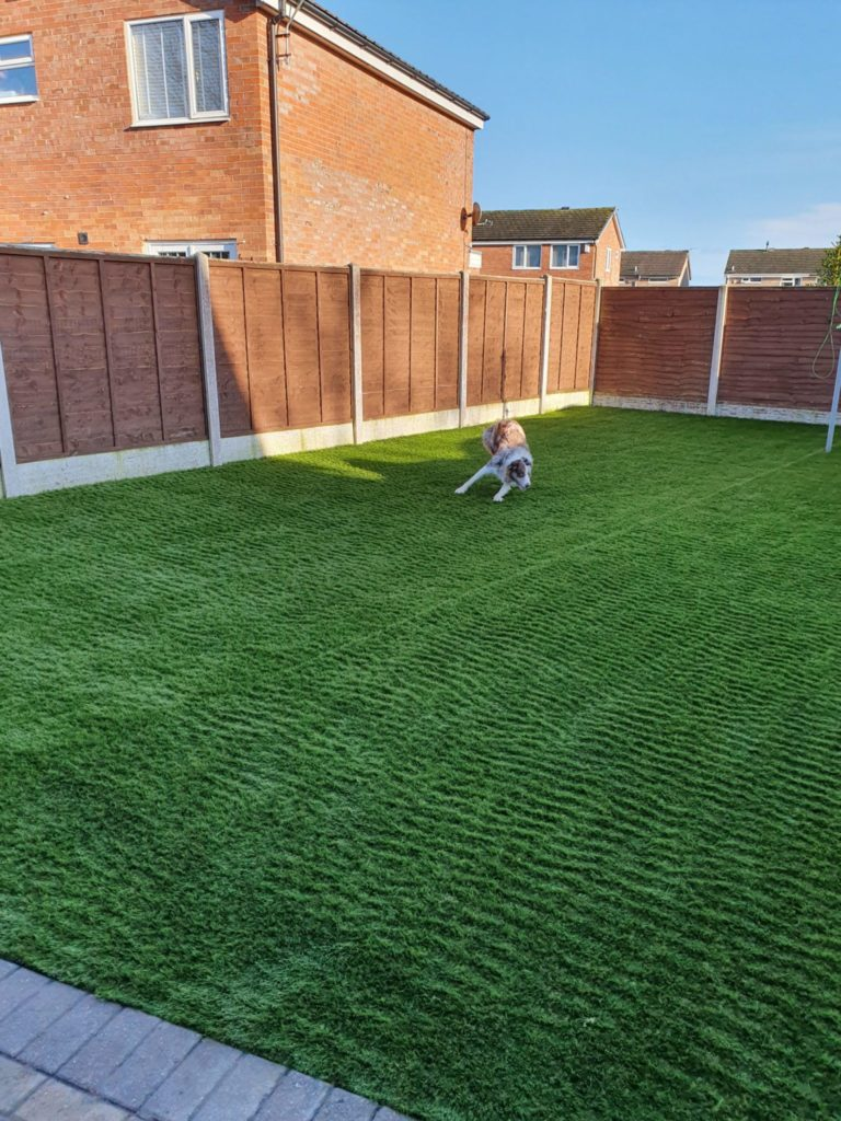 dog playing on artificial grass lawn in carlisle